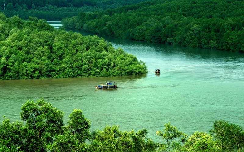 can-gio-mangrove-forest-vam-sat